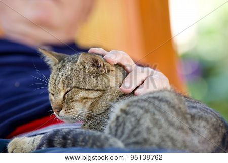Tabby cat enjoying cuddling in old man's lap poster