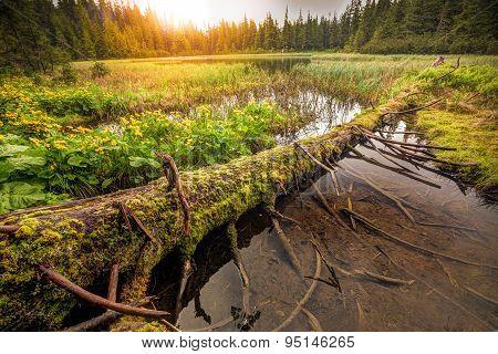 Lost mountain lake