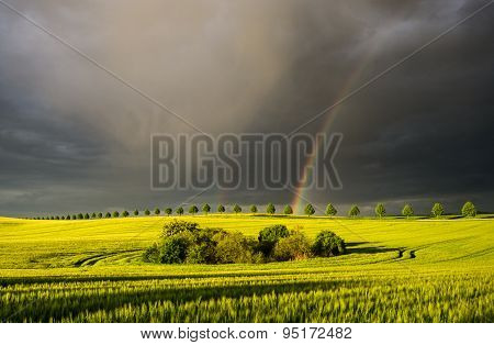 Spring colorful rainbow over the field after passing rainstorm