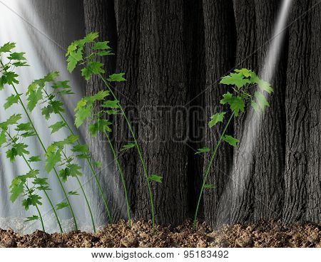 Finding new opportunity and independent thinker concept and new leadership symbol or individuality as a group of growing sapling trees that grow together with one individual sapling going in the opposite direction following a small beam of light. poster