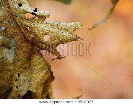 Autumn Leave