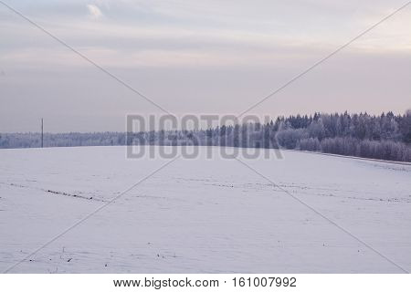winter landscape. Cloudy day. Winter decline. The muffled colors. Monochrome landscape. Winter forest.