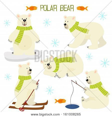 set of isolated polar bear - vector illustration, eps