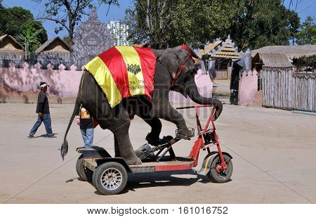 Hua Hin Thailand - January 2 2010: Elephant rides its special motorcycle during a performance of the Hua Hin Safari Elephant Show