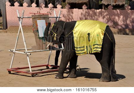 Hua Hin Thailand - January 2 2010: An elephant demonstrates its painting skills during a performance of the Hua Hin Elephant Show
