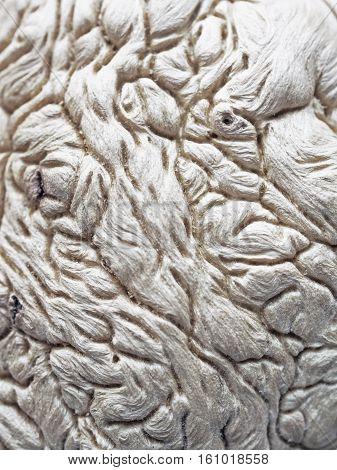 unusual tree structure fibers brain interweaving rhizome