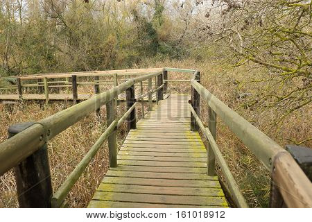 A wooden walkway with hand rails over a reed marsh amongst trees under a grey cloud sky.