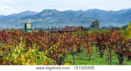 Old Building In A Colorful Vineyard