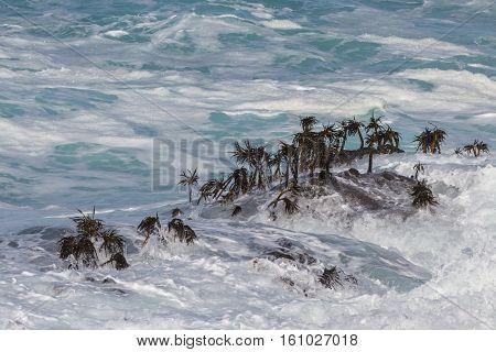 Seaweed And Waves