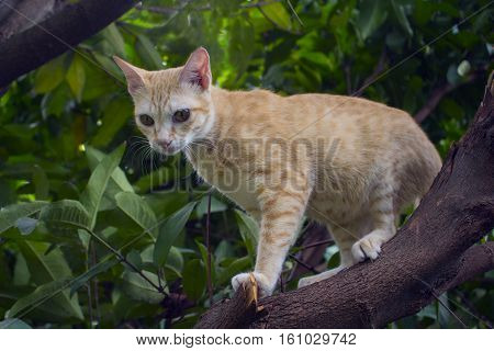 Red kitten on a tree branch with greenery. Domestic pet traveling in garden. Red cat climbing tree. Cute kitty in green leaves. Fat pregnant cat image. Hunting cat outdoor picture. Cat stuck on tree