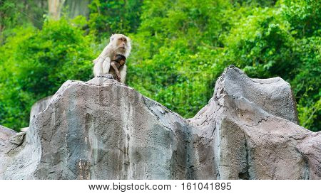 Monkeys sitting on The Cliff Abstract of Purity of Love between Mom & baby monkey.
