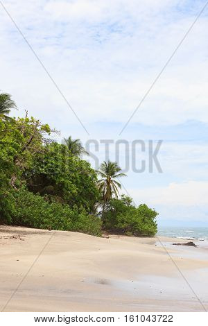 Trees and sand beach Montezuma Costa Rica