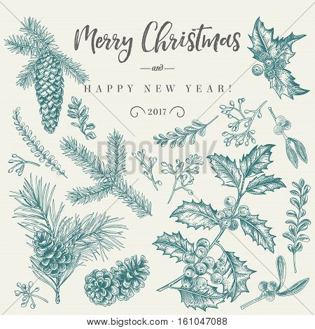 Vector set with Christmas plants. Botanical illustration. Branch of holly spruce pine boxwood spruce and pine cones. Design elements isolated on white background. Engraving style. Black and white.