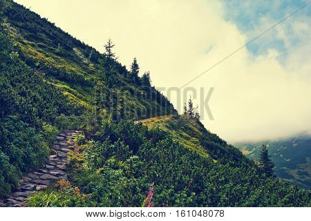 Mountainside with green trees. Vintage retro picture. Nature in mountains concept.