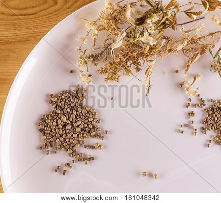 White Plate, Dried Leaves Of Hemp And Hemp Seeds