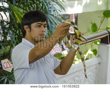 snake show at thai red cross snake farm bangkok thailand on 6 April 2014