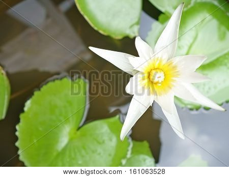 a white lotus flower on a water