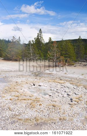 Vixen Geyser is about to erupt. Norris Geyser Basin, Yellowstone National Park, USA