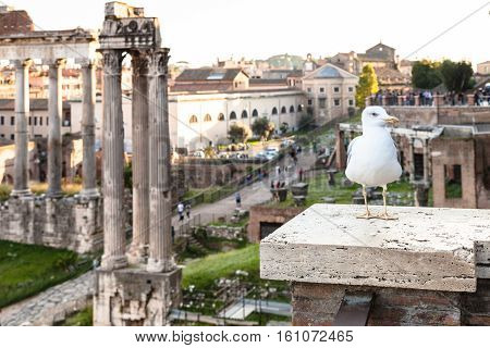 Urban Seagull And Ruins Of Forum Of Caesar