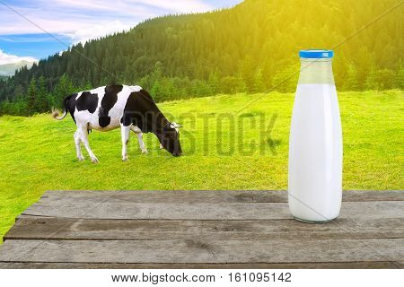 Milk in glass bottle on old wooden table with grazing cow on the meadow in mountains with sunshine in background. Milk with cow on the background . Milk bottle on table