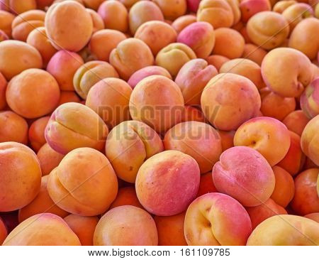 organic apricots are not the best looking but...