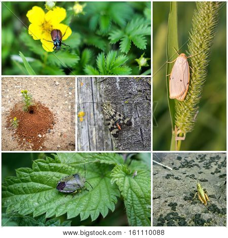 Collage of six different pictures of insects.