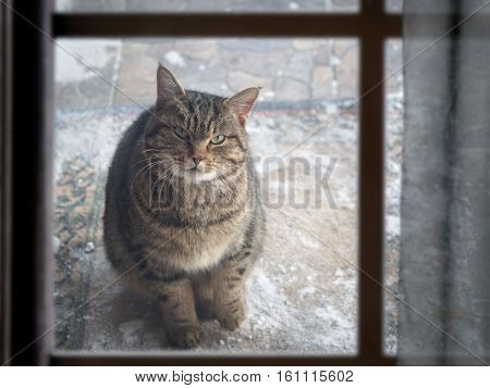 stray cat sits outside and looks out the window of the house. Winter snow. Cat is cold. The problem of stray animals