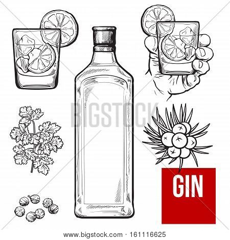 Gin bottle, shot glass with ice and lime, juniper berries, parsley, cardamom, sketch vector illustration isolated on white background. hand drawn gin bottle, shot glass and cocktail ingredients