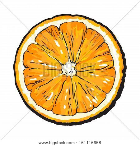 Orange cut in half, top view, sketch style vector illustration isolated on white background. Realistic colorful hand drawing of round slice of unpeeled orange