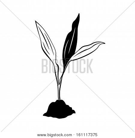 Sapling of tree. Vector Illustration Isolated on white background