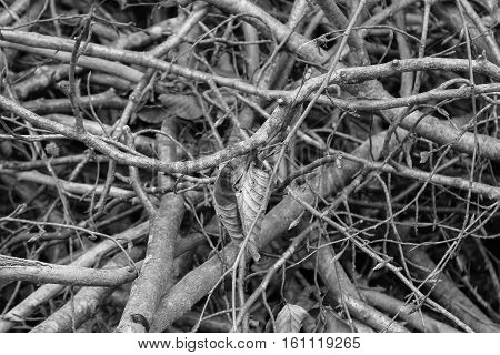 heap of brushwood and twigs in forest