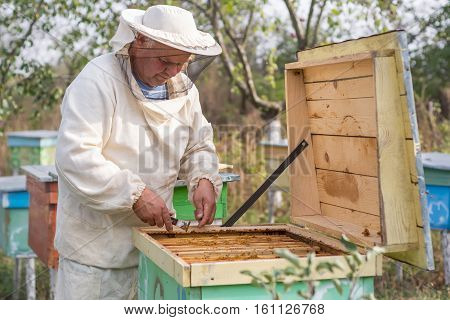 Beekeeper is working with bees and beehives on the apiary. Beekeeper on apiary.