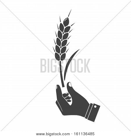 Man Holding In Hand Wheat Ear