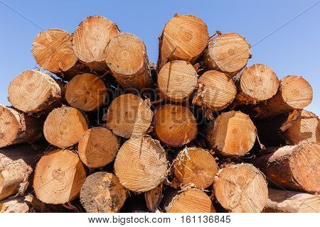 Forest trees cut stacked wood logs along dirt road rural mountains