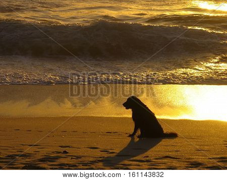 Silhouette Of A Dog With Sun Setting In Back Ground