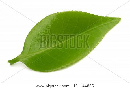 Tea leaf isolated on a white background