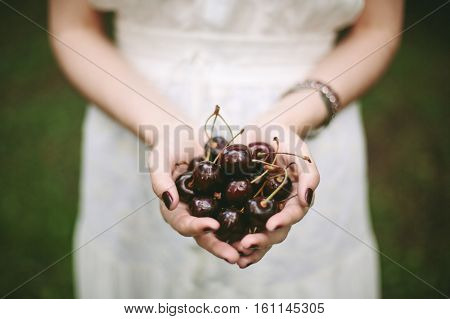 Young Female Holding Heap Of Sweet Cherries