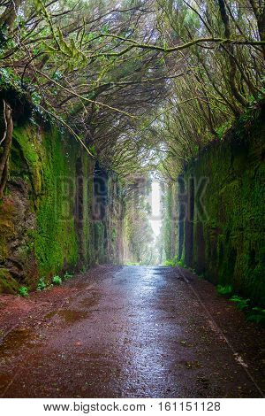natural tunnel in the Rural Park Anaga in Tenerife Canary Islands Spain