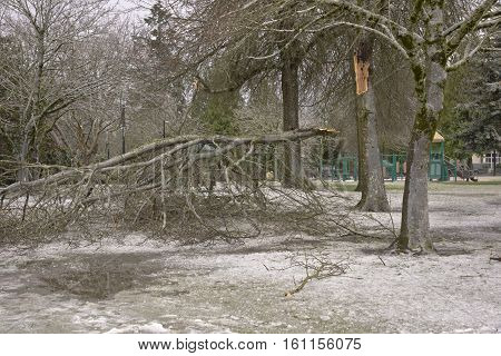 Storm damage of heavy ice broken tree branch public park Oregon.