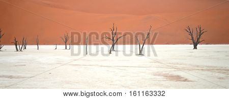 Dry trees against red dunes in Deadvlei Sossusvlei. Namib-Naukluft National Park Namibia Africa