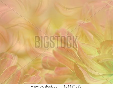 flower petals on a blurred pink-yellow colorful background. floral composition. floral background. Nature.