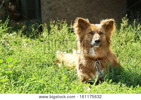 Fluffy dog on green grass against blurred background