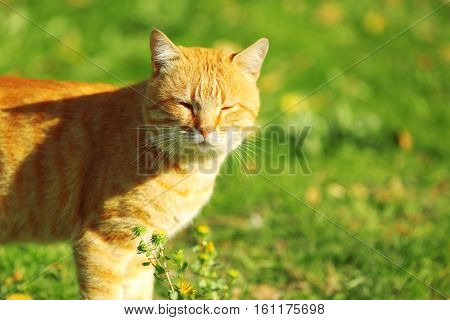 Cute tabby cat on green lawn, close up view
