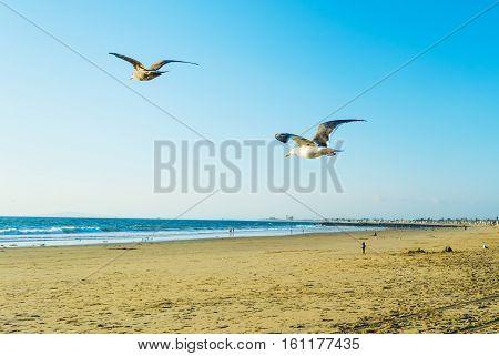 a seagull flying in Newport Beach California