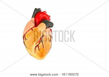 Human heart model isolated on white background