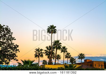 Palm trees In Los Angeles at sunset California