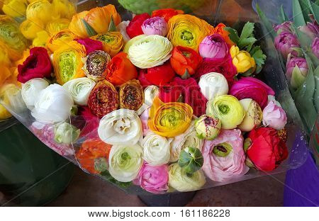 Big bouquet of beautiful ranunculus colorful flowers