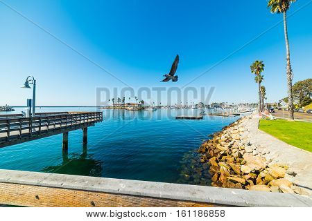 Seagull flying over Oceanside harbor in California