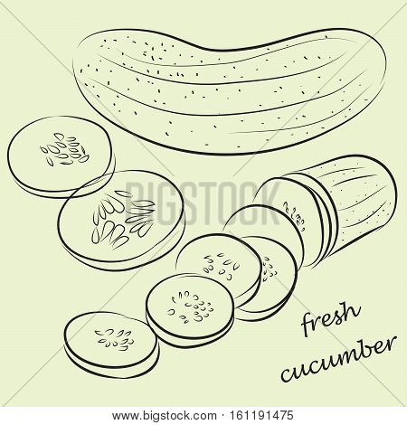Fresh cucumber, and chopped cucumber. vector illustration
