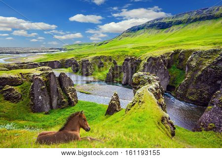 Bay thoroughbred horse rested on a cliff. The striking canyon in Iceland. The Icelandic Tundra in July. Bizarre shape of cliffs surround the stream with glacial water